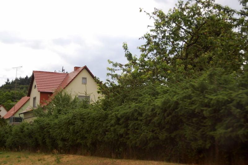 heckenpflanzen kaliebes blumenhaus. Black Bedroom Furniture Sets. Home Design Ideas