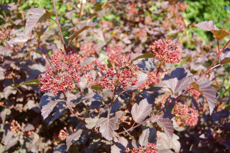 Kaliebes Blumenhaus - Blühende Gehölze N - Z
