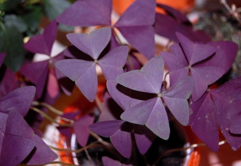 Kaliebes blumenhaus schnell berblick zimmerpflanzen for Fliegen in der erde von zimmerpflanzen