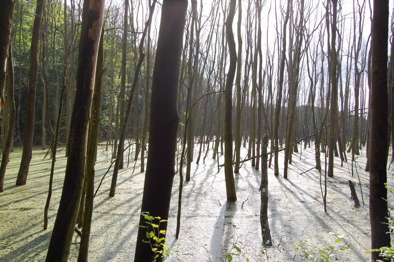 Kaliebes blumenhaus sauerstoffpflanzen for Heimische teichfische
