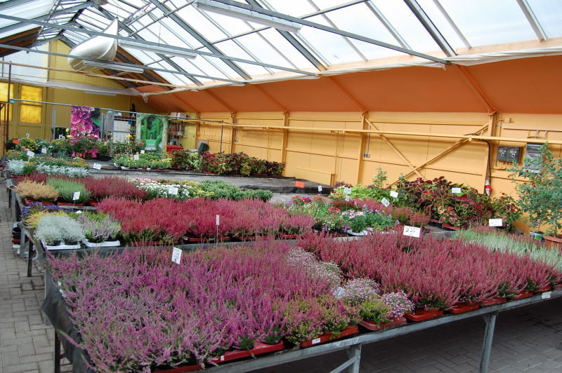 kaliebes blumenhaus allgemeines pflanzenbeschreibungen. Black Bedroom Furniture Sets. Home Design Ideas