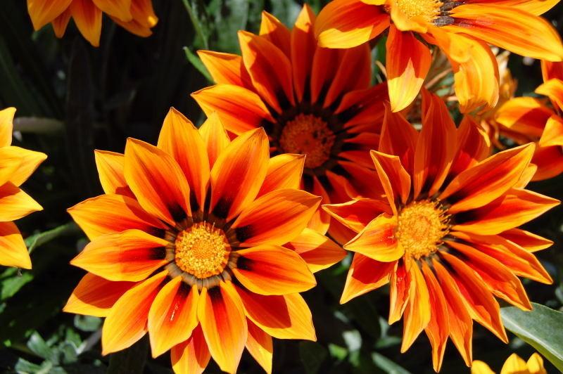 Zimmerpflanzen Die Direkte Sonne Vertragen kaliebes blumenhaus pflanzenbeschreibungen